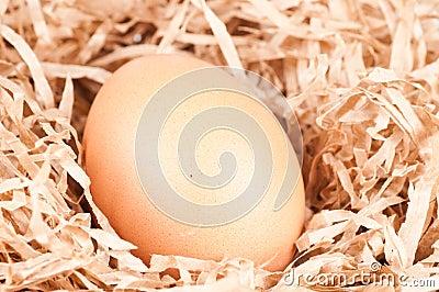 Ei in een nest