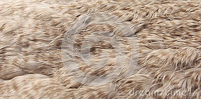 Eider duck feathers (eiderdown)