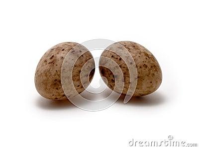 Eier des großen Tits