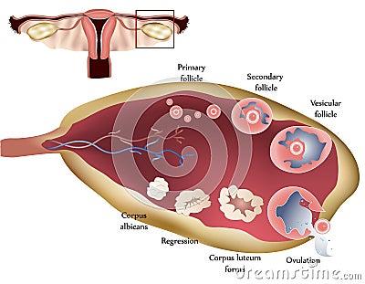 mooi vrouwenlichaam vagina video