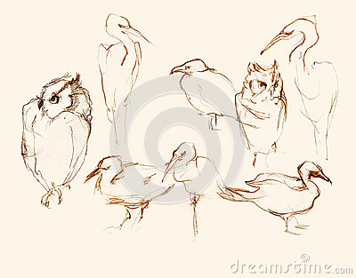 Eight  birds pencil artistic sketches illustration