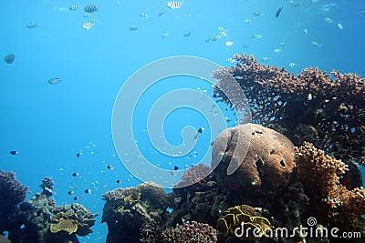 Eilat undersea sail