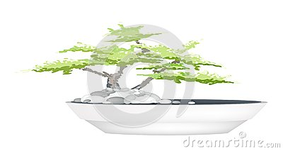ein bonsai baum im blumen topf auf wei em hintergrund. Black Bedroom Furniture Sets. Home Design Ideas