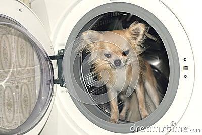 ein hund in der waschmaschine lizenzfreies stockfoto bild 37785705. Black Bedroom Furniture Sets. Home Design Ideas