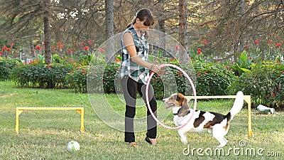 Ein Hund springt durch einen Ring stock video footage