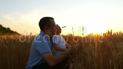 Ein Landwirtmann und sein Sohn betrachten eine Weizenernte und sind auf dem Feld bei Sonnenuntergang Vati und Kind sind glücklich stock video