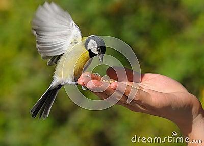 Ein realer Vogel in der Hand