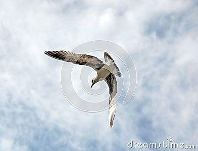 Ein Vogel-Flugwesen