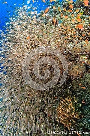 Eine Explosion von glassfish