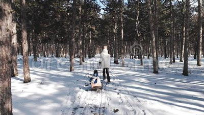 Eine junge Mutter in einem Wei? hinunter Jacke l?uft durch den herrlich sch?nen Kiefernwald des verschneiten Winters und zieht ei stock footage