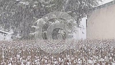 Eine schöne Schneefallansicht von meinem Haus stock footage