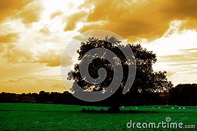 Einsamer Baum auf dem Gebiet
