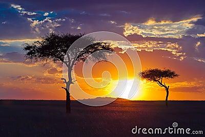 Einsamer Baum zwei auf einem Hintergrund des tropischen Sonnenuntergangs