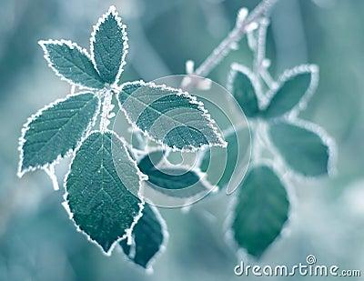 Eisige Blätter