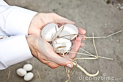 Ekologiczni jajka
