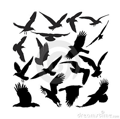 El águila del halcón del cuervo gulls el cuervo