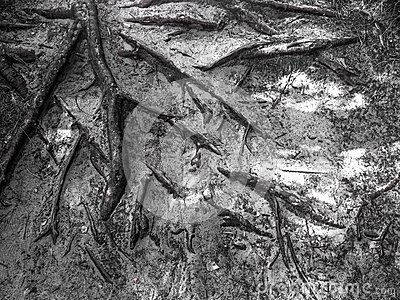 El árbol arraiga el fondo