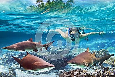 El bucear con los tiburones de toro peligrosos