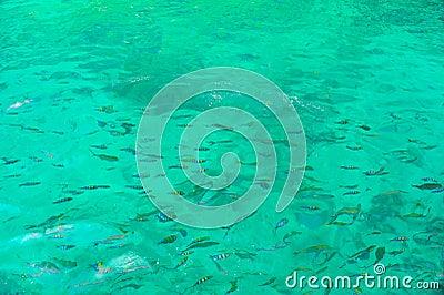 El bucear en el mar abierto