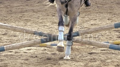 El caballo salta sobre obst?culo en la c?mara lenta Front View almacen de metraje de vídeo