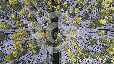 El coche pasa entre los árboles metrajes