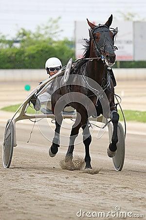 El competir con del italiano del caballo Foto de archivo editorial