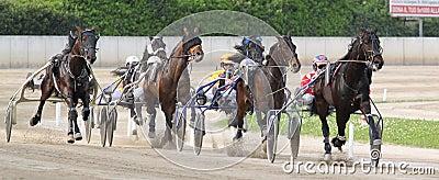 El competir con del italiano del caballo Foto editorial