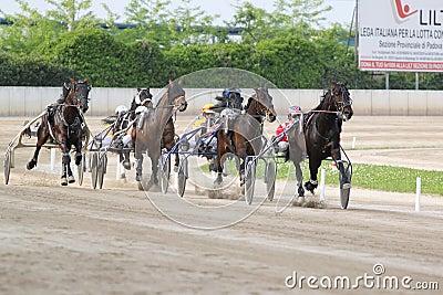 El competir con del italiano del caballo Fotografía editorial