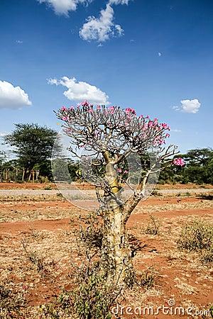 El desierto subió, bastante y planta rara