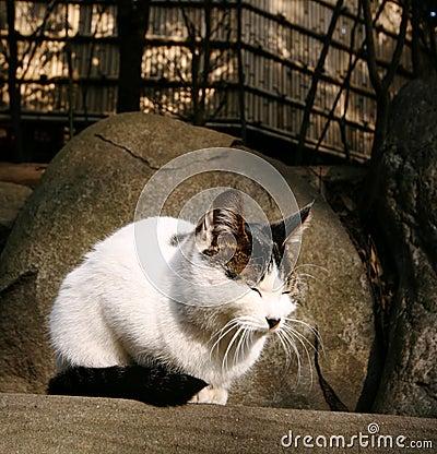 El gato disfruta de la sol