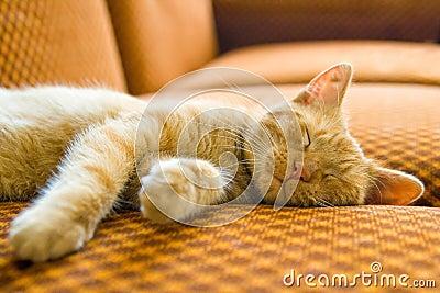 El gato el dormir