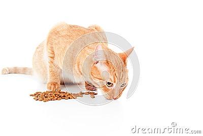El gato rojo come la alimentación