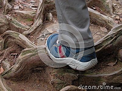 El ir de excursión en el bosque