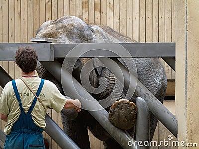 El parque zoológico en Ostrava Foto de archivo editorial