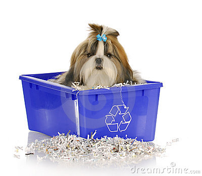 El perrito adentro recicla el compartimiento