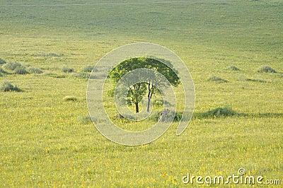 El árbol del pasto en sol de oro