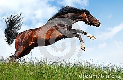 El semental árabe salta - photomontage realista