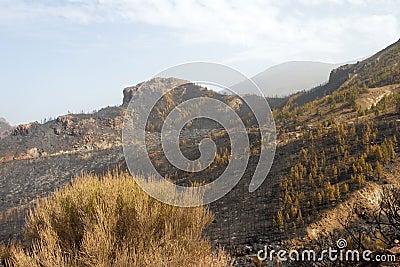 El Teide 9