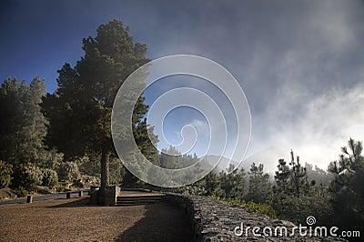 El Teide Tree