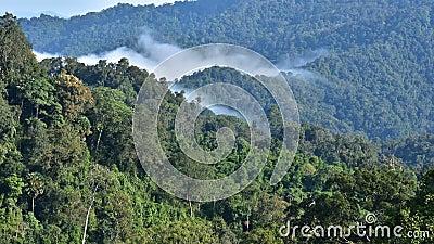 El tiempo pasa flotando el paisaje de niebla en el bosque almacen de metraje de vídeo