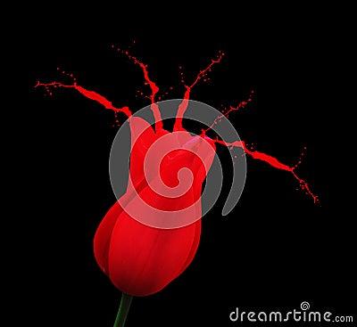El tulipán rojo con la pintura salpica