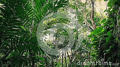 El viajar más allá de cara overgrown de la roca en la selva almacen de metraje de vídeo