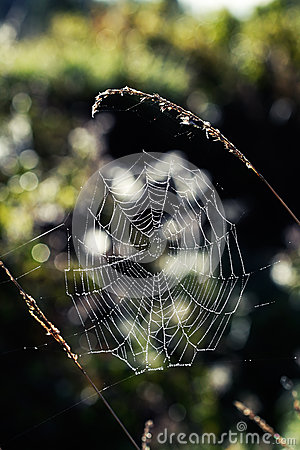 Web de araña