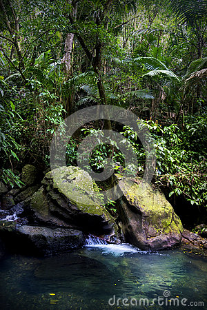 Free El Yunque Rainforest Stream Pool Royalty Free Stock Images - 69615009