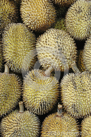Elai, tropical fruits like durian fruit