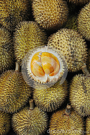 Elai, tropical fruits like durian fruit