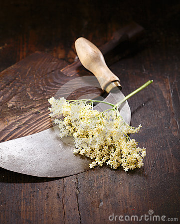 Elder flowers, round knife and cutting board