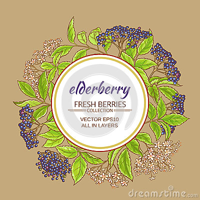 Elderberry vector frame Vector Illustration