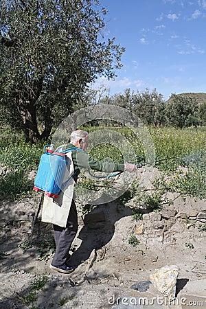 Elderly farmer spraying weed pesticide