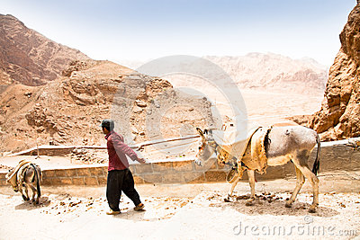 Elderly iranian shepherd with a donkey Editorial Stock Image